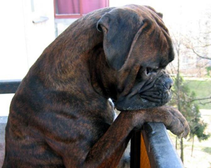 Κύπρος:Τέρμα οι σκύλοι στα μπαλκόνια – Τα νέα 10 μέτρα για τα ζώα