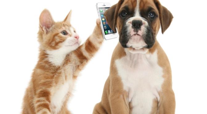 Χρήσιμα τηλέφωνα συλλόγων
