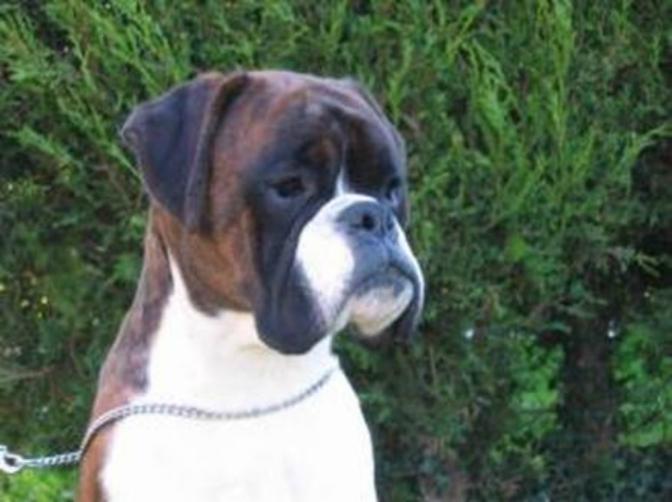 Εκτροφή σκύλων…Όσα θα θέλατε να ρωτήσετε!