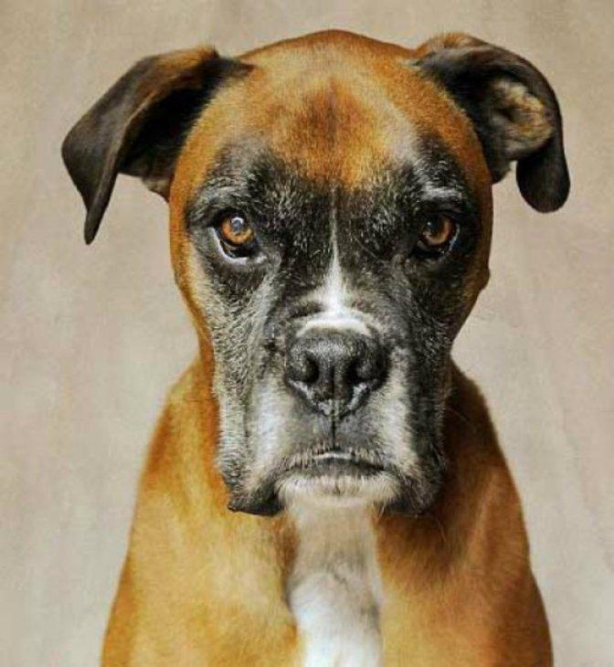 Έρευνα.Νιώθουν τα σκυλιά μας ζήλια;