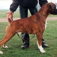 Boxer το 2000