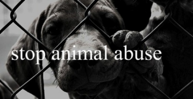 Η δικαιοσύνη κηρύσσει πόλεμο στους βασανιστές ζώων