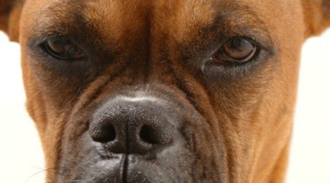 Έχετε ποτέ σκεφτεί,ότι ο σκύλος σας μπορεί και να μην απολαμβάνει πάντα τα χάδια σας;