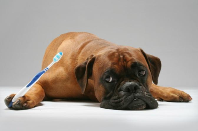 Φροντίστε το στόμα του σκύλου σας