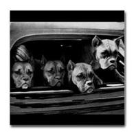 boxer_vintage_coaster