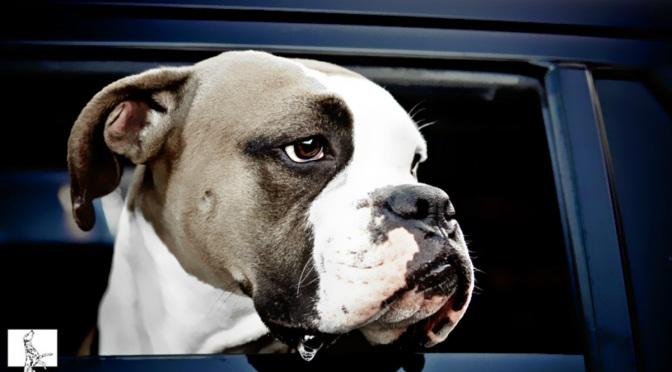 Σκύλος και αυτοκίνητο