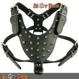 www.aliexpress.com/boxer-dog-colors_price.html