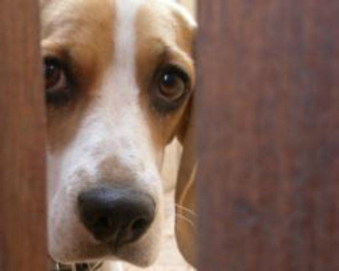 Οδηγίες αντιμετώπισης κακοποίησης ζώου