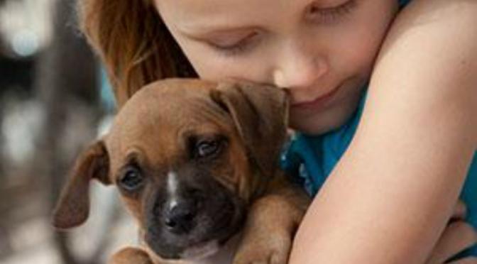 Μπορούμε να βελτιώσουμε την Ελληνική νομοθεσία περί ζώων συντροφιάς