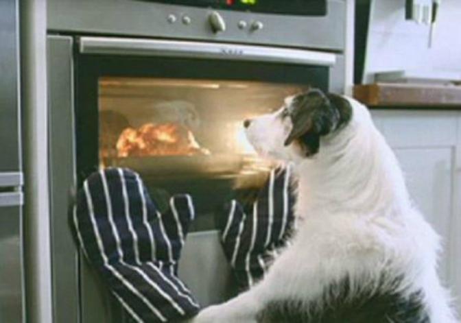 Ας μιλήσουμε για το μαγειρευτό φαγητό στον σκύλο μας