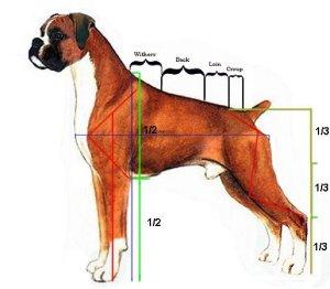 measure-male