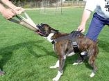 www.fordogtrainers.com/index.php?main_page=product_info&products_id=152