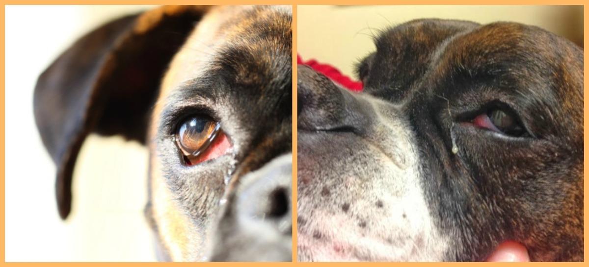 Μάτια:φροντίδα,ασθένειες και προβλήματα