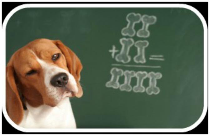 Πόσο έξυπνος είναι ο σκύλος σας?