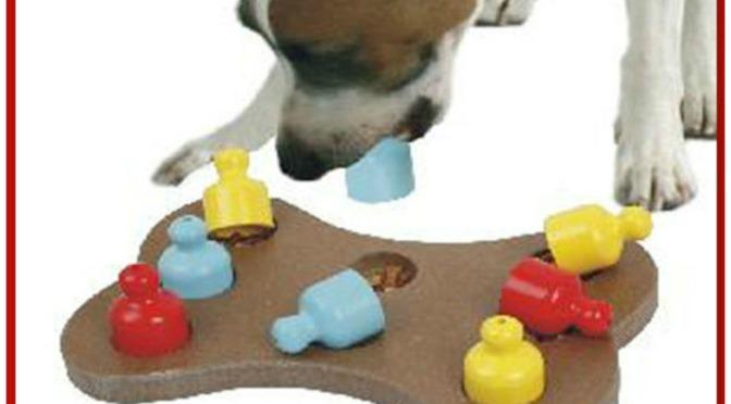 Σκυλιά με… υψηλό IQ