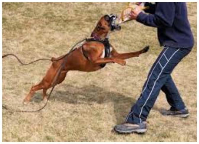 Γενικές πληροφορίες σχετικά με τα σκυλιά εργασίας (Working Group)