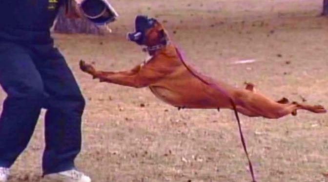 Boxer,σκύλος εργασίας