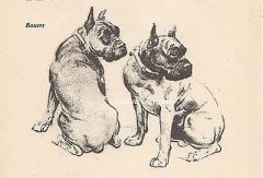 VINTAGE-Dog-Art-Print-1950-BOXER-DOGS