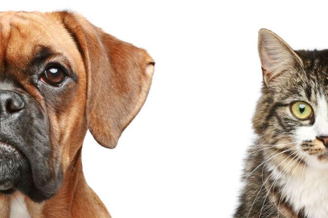 Ενδεικτικά σημεία του νόμου υπ'αριθμ.4039 για τα δεσποζόμενα και τα αδέσποτα ζώα συντροφιάς και την προστασία των ζώων από την εκμετάλλευση ή τη χρησιμοποίηση με κερδοσκοπικό σκοπό.