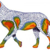Ατοπική δερματίτιδα στο σκύλο (και στη γάτα)