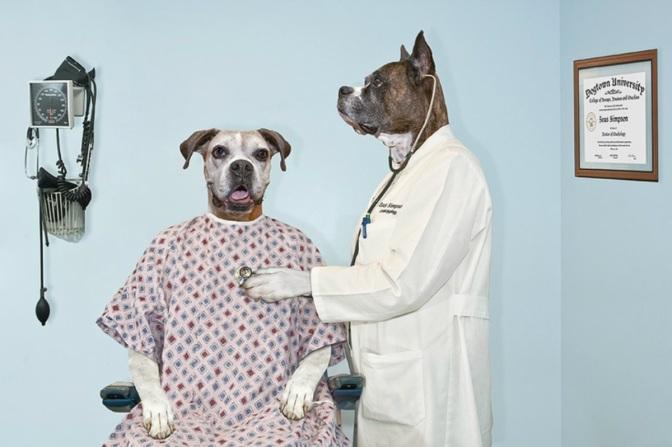Η υγεία των σκύλων περνά από το..πιάτο