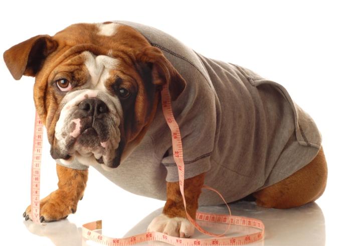 Η παχυσαρκία του σκύλου