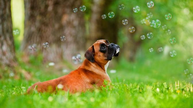 Πώς να καταπολεμήσετε την μυρωδιά του σκύλου