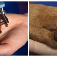 Πώς να κόψετε τα νύχια του σκύλου σας