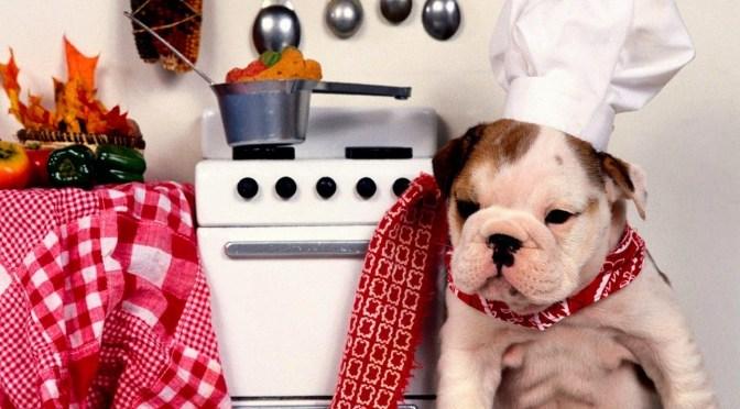 Μαγειρευτό φαγητό για το σκύλο,βασικοί κανόνες