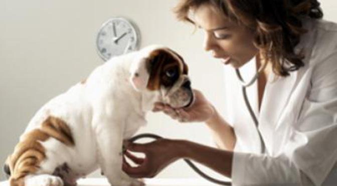 Νόσος του Carre (μόρβα) στους σκύλους