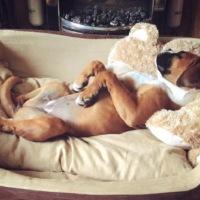 Γιατί τα σκυλιά ξύνουν το πάτωμα ή το κρεβάτι πριν ξαπλώσουν?