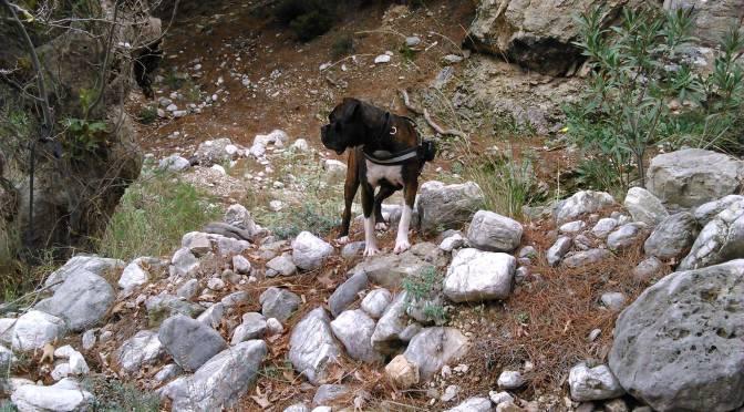 Πώς να κάνετε πεζοπορία με το σκυλί σας: Συμβουλές, κανόνες και χρήσιμα εργαλεία