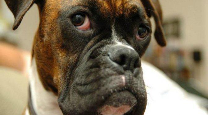 Μύθος:τα σκυλιά είναι παμφάγα