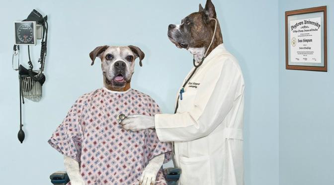 Πνευμονία (από αναρρόφηση) σε σκύλους
