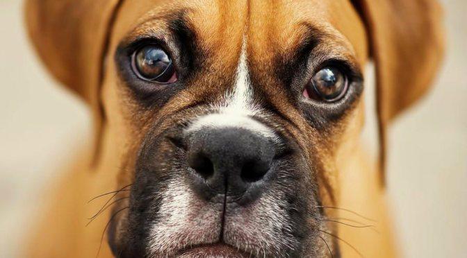 Απώλεια βάρους στα σκυλιά