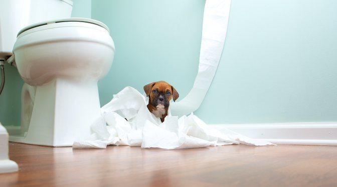 Διάρροια στους σκύλους,αιτίες και θεραπεία