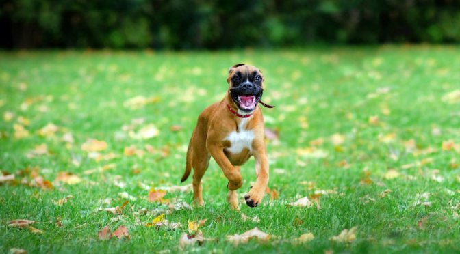 Πώς να φτιάξετε έναν ασφαλή κήπο για το σκύλο