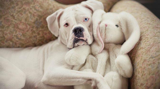 Γιατί ο σκύλος σας ροχαλίζει ενώ είναι ξύπνιος;