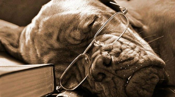 Το ήξερες ότι στη μύτη ενός σκύλου…