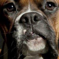 Υπερβολική παραγωγή σάλιου σε σκύλους