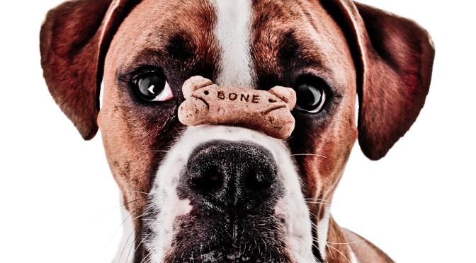 Εύκολες,σπιτικές συνταγές για σκύλους