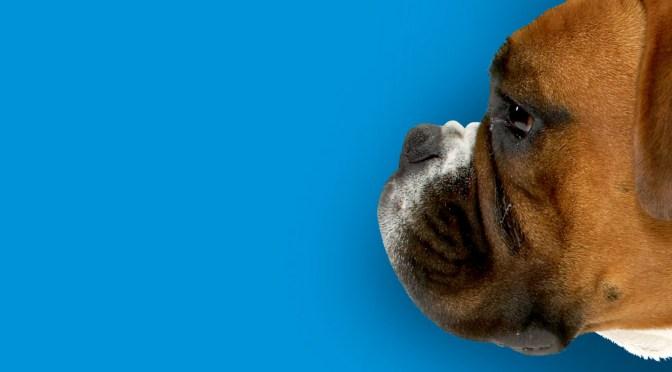 Εγκεφαλικά επεισόδια στα σκυλιά