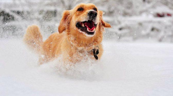 Κρυοπαγήματα στα σκυλιά