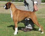champion_dog