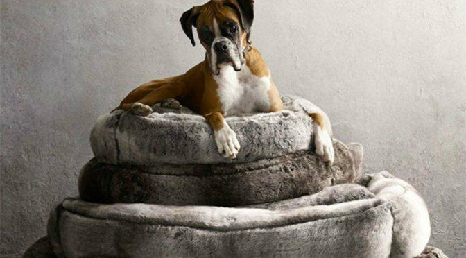 Τι μας δείχνει το ροχαλητό για την υγεία του σκύλου μας