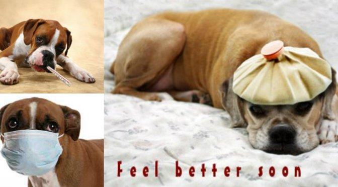Ο πυρετός στους σκύλους