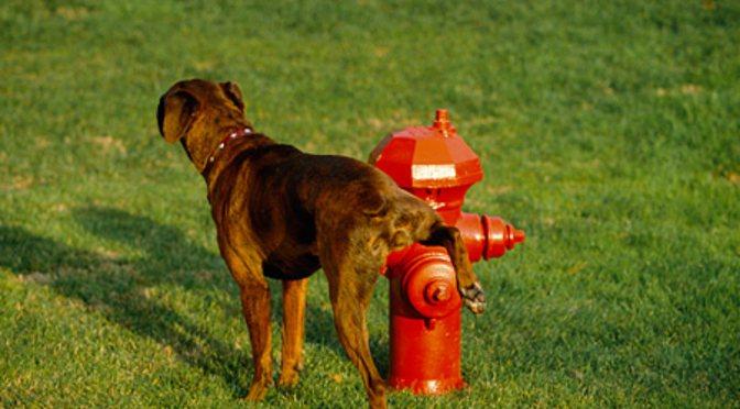 Το μαρκάρισμα στους σκύλους