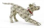 justine-smith-washington-money-dog