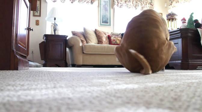 Γιατί ο σκύλος μου τρίβει τον πωπό του;