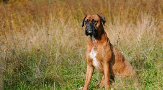 Γιατί τα σκυλιά ξύνουν το έδαφος μετά την αφόδευση;
